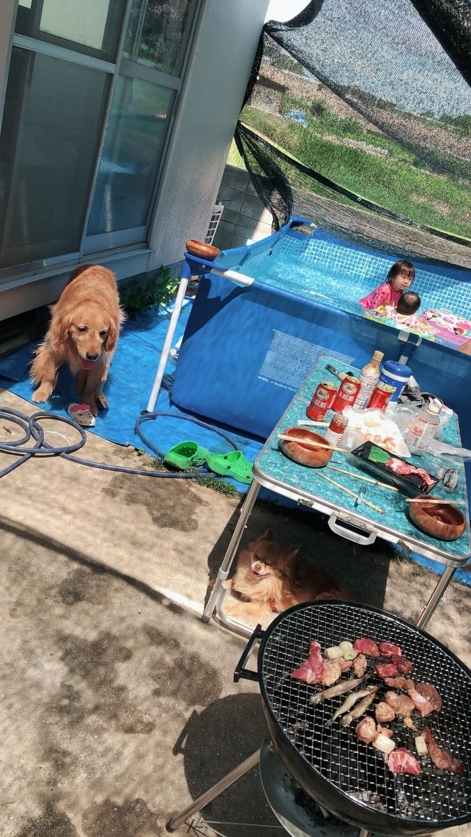 夏はプールが大好きです