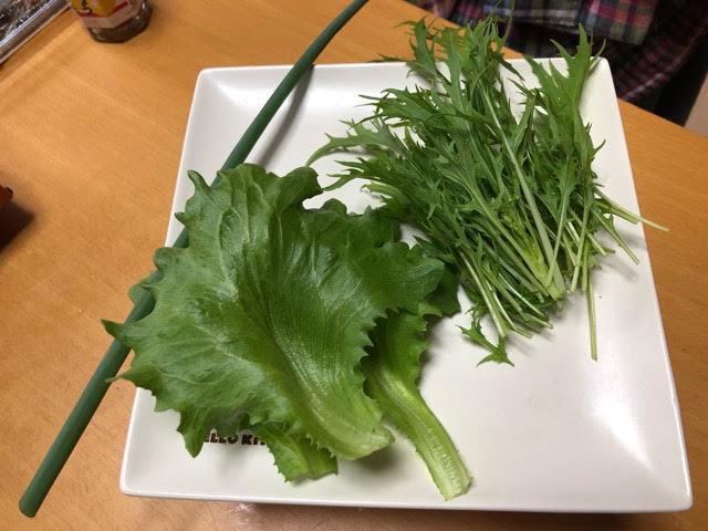 5月14日レタス、水菜、ネギの収獲