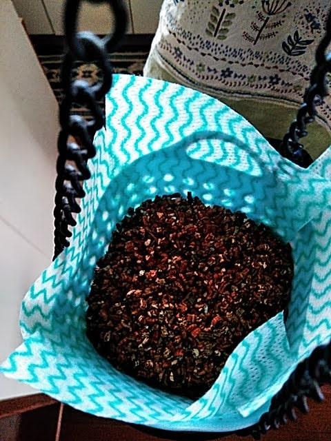5月10日バジルの種蒔き