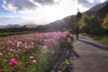 京都新聞写真コンテスト「スマホ撮るし待って」。