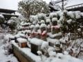 京都新聞写真コンテスト」 頑張ります。