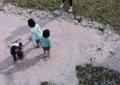 京都新聞写真コンテスト」 花(桜)の川「何で入らへんのン」。?