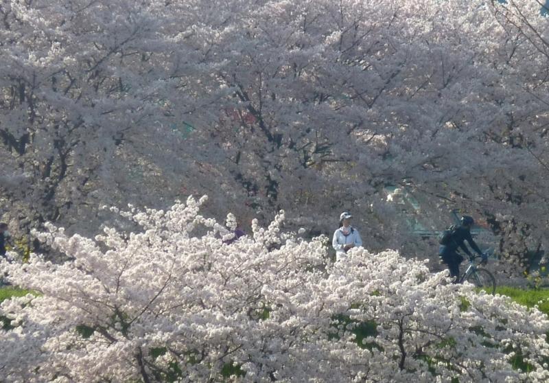 京都新聞写真コンテスト 秀吉の気分。