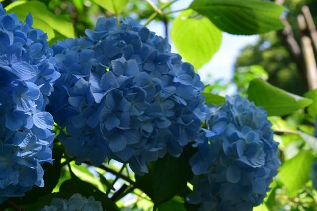 f:id:orange_mikan200:20160612124755j:image