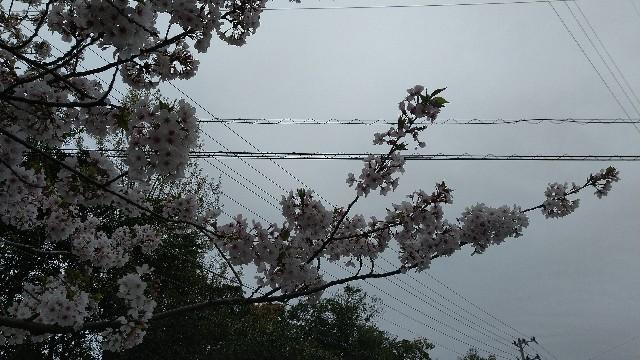 f:id:orangenoyume:20210407045456j:plain