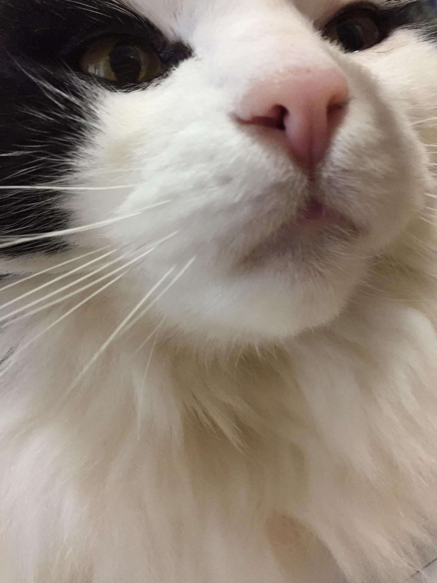 シュレディンガーの猫の猫問題の画像