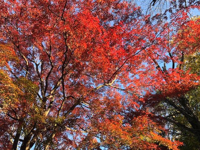 井の頭公園(紅葉)
