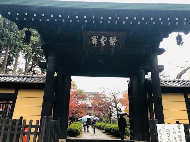 豪徳寺 正門