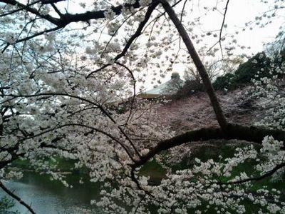 2008年3月27日、花見。お堀の先には武道館。