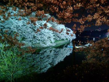 2008年、千鳥が淵の夜桜その2。