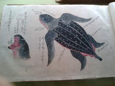 東博にて、特集陳列「博物図譜」。亀コワイ。