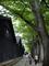 山形県酒田。左手は山居倉庫、右手は欅並木。緑がきれい。