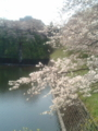 [散歩]2009年4月3日。お堀と桜。