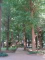 [目白周辺] 2009年7月25日、図書館前。緑っていいですねえ。
