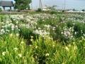 [散歩]2012/06/17、旧菖蒲町にて