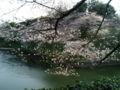[散歩] 2013年3月22日、北の丸公園のお濠にて