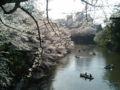 [散歩] 2013年3月28日、北の丸公園。向こう側は千鳥ヶ淵