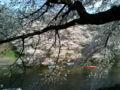 [散歩] 2013年3月28日、千鳥ヶ淵の入り口にて
