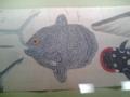 [museum] 2013年9月23日、東博にて。博物図譜コーナー。