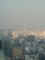 [散歩] 2014年元旦、東京タワーよりスカイツリーを臨む。