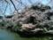 2014/03/31、皇居北の丸の武道館を臨んで。