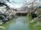 2014/03/31、皇居北の丸公園のお濠。ボートが珍しくいない。