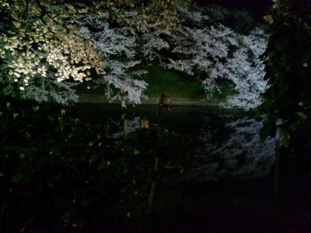 2014/04/01、千鳥ヶ淵の夜桜。
