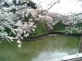 [散歩] 2014/04/02、皇居北の丸。