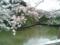 2014/04/02、皇居北の丸。