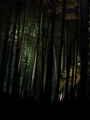 [旅行] 2014年4月28日、夜の高台寺