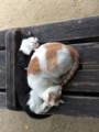 [旅行]2014年10月12日、大阪・四天王寺にて。野良猫らしい。