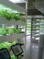 [散歩] 2015年9月6日、銀座「伊東屋」の野菜工場。