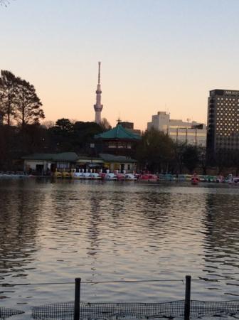 2016年元旦、上野不忍池の夕景。
