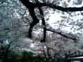 [散歩]2016/04/03、池袋法明寺
