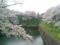 2016/04/06、北の丸公園