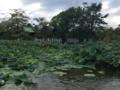[散歩]2016年9月2日、鶴岡八幡宮の源平池