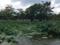 2016年9月2日、鶴岡八幡宮の源平池