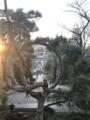 [散歩]年末、上野・清水観音堂の「月の松」