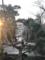 年末、上野・清水観音堂の「月の松」