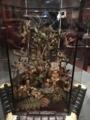 [museum]大英自然史博物館展。ハチドリのガラスケース