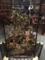 大英自然史博物館展。ハチドリのガラスケース