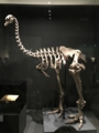 [museum]大英自然史博物館展。モア全身骨格