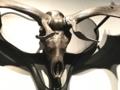 [museum]オオツノジカ頭骨。大英自然史博物館展。