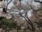 2017/04/1、新宿御苑にて花見