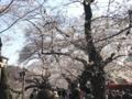[散歩]2017/04/4、北の丸公園