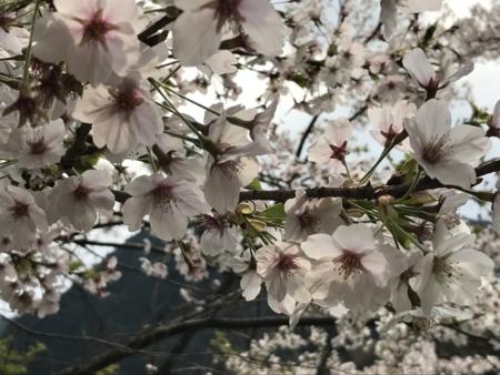 2017/04/29、木曽「寝覚の床(とこ)」