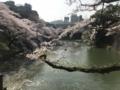 [散歩]2018年3月、北の丸公園のお濠