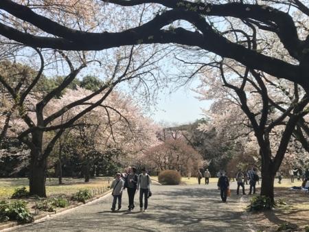 2018/03/31、新宿御苑で花見