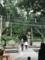 2018/07/29、京都。嵐山嵯峨野、竹林の道の途中