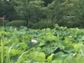 [旅行][京都]2018/07/30、朝の天龍寺